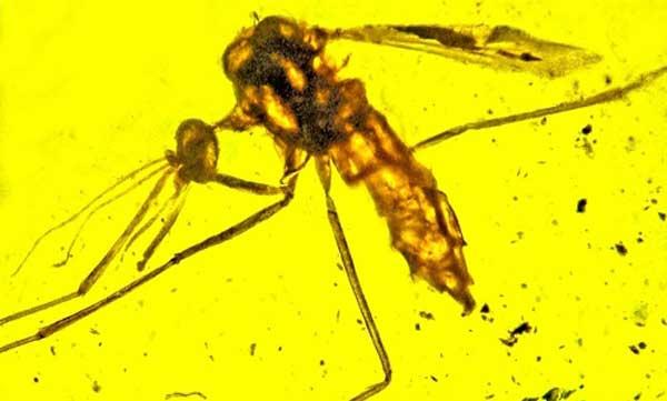 Muỗi hóa thạch